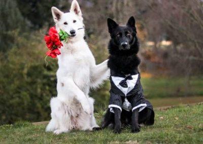 pastor blanco de boda