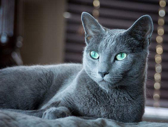 Azul Ruso