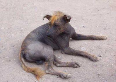 proyecto perro pila argentino