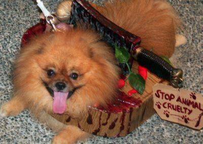 disfraces de halloween para perros pomerania