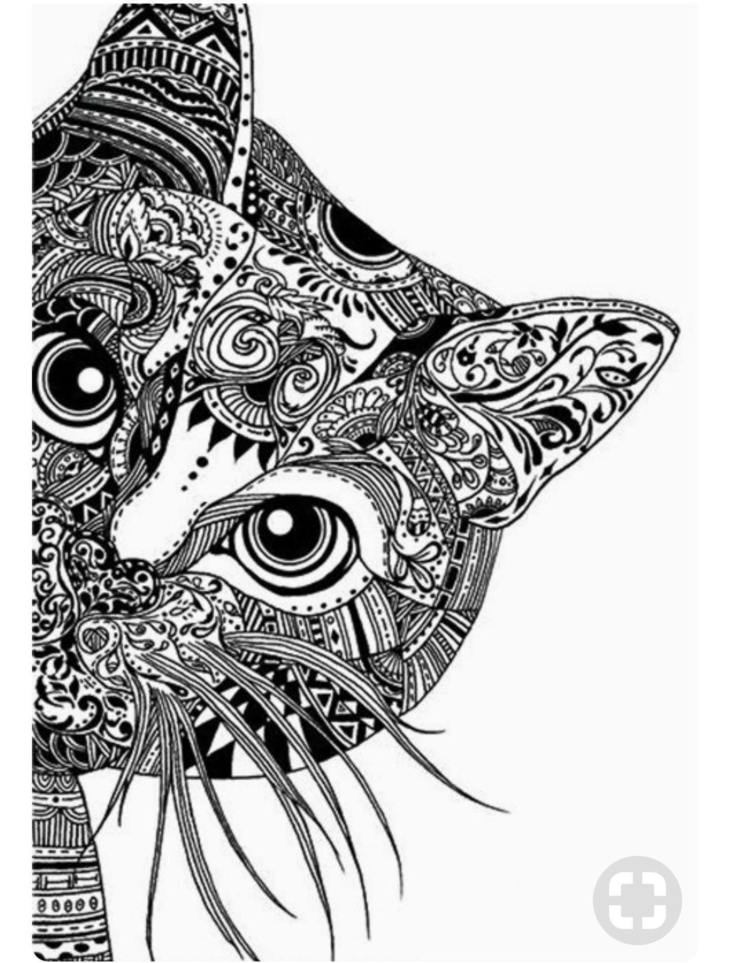 Los Gatos ▷ Todo lo que Debes Saber [Guía 2018] | LosAnimales.org