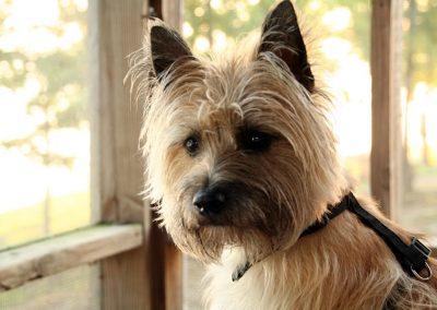 nombres para perros cairn terrier