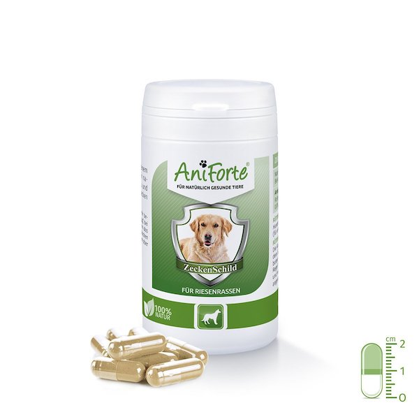 Pastillas antipulgas para perros