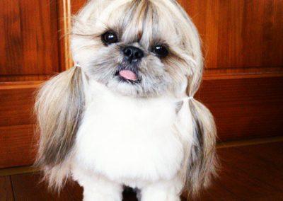 peinados de perros pequines