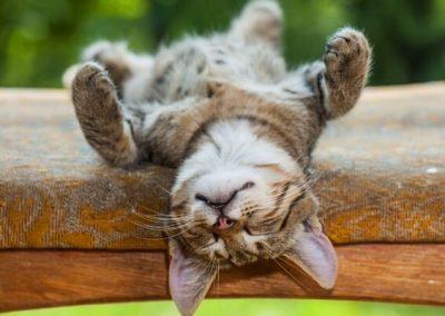 porque los gatos duermen tanto