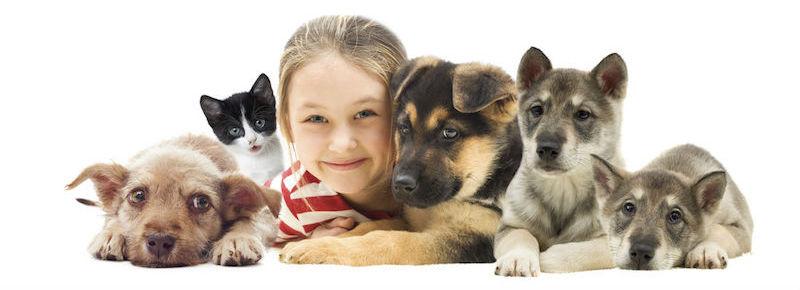 imagenes de animales domesticos para niños