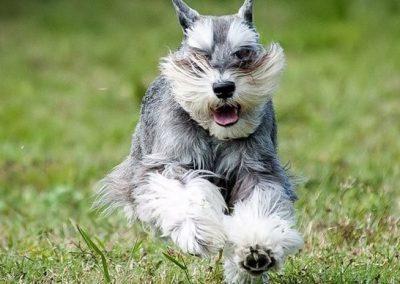nombres para perros schnauzer miniatura hembra