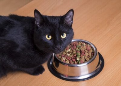 origen del gato bombay