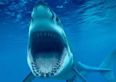 tiburones en peligro de extincion y sus nombres