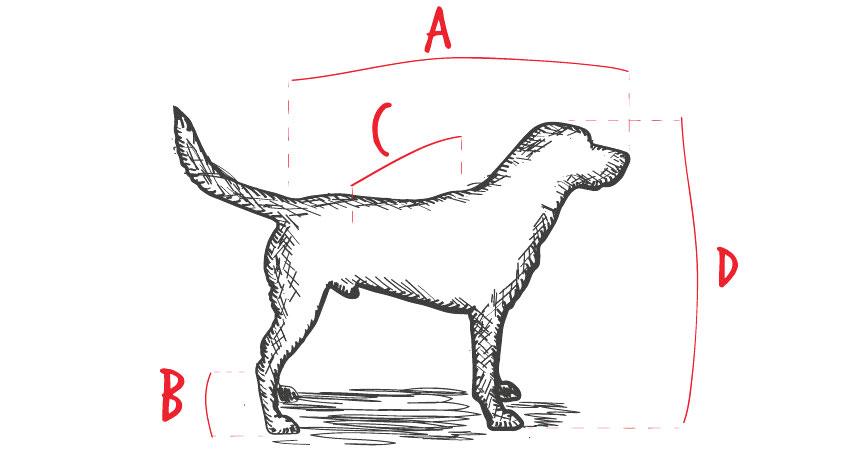 como elegir transportin para perro